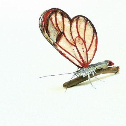 transparent butterfly Insects Created from Recycled Human Hair