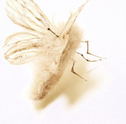 white butterfly Insects Created from Recycled Human Hair