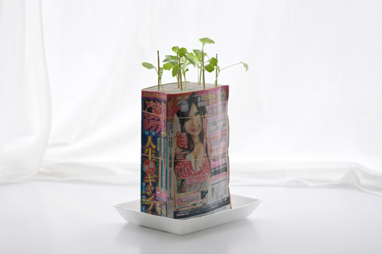 manga When Plants Grow Out of Old Manga Comics