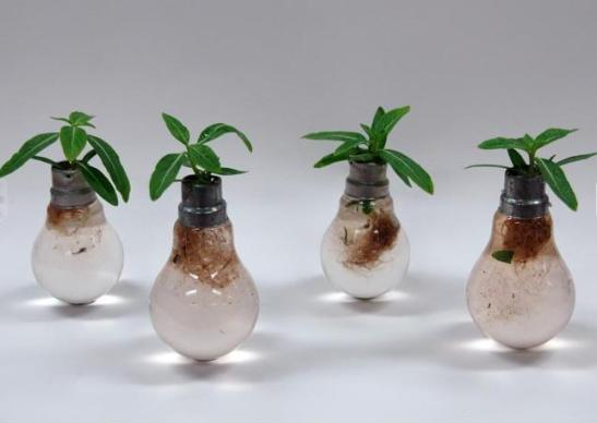Ten Incredible Planters Created from Old Light Bulbs | RecycleNation:recycle light bulb planter,Lighting
