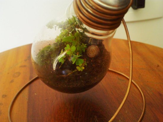 recycle light bulb planter