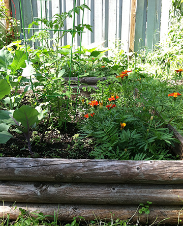 Reuse In The Garden With Ecoscraps Recyclenation