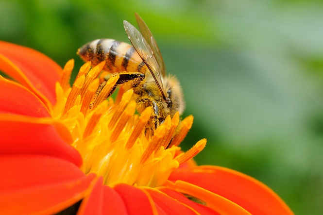 6 Natural Ways to Keep the Bees Away | RecycleNation