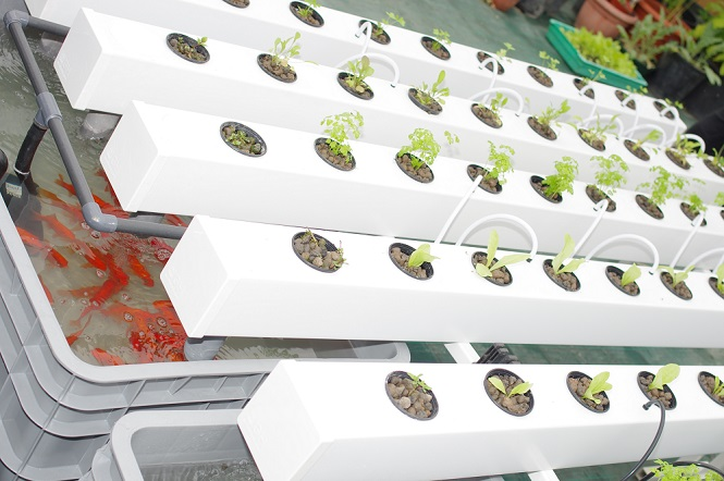 Aquaponic Farming: The FAQs | RecycleNation